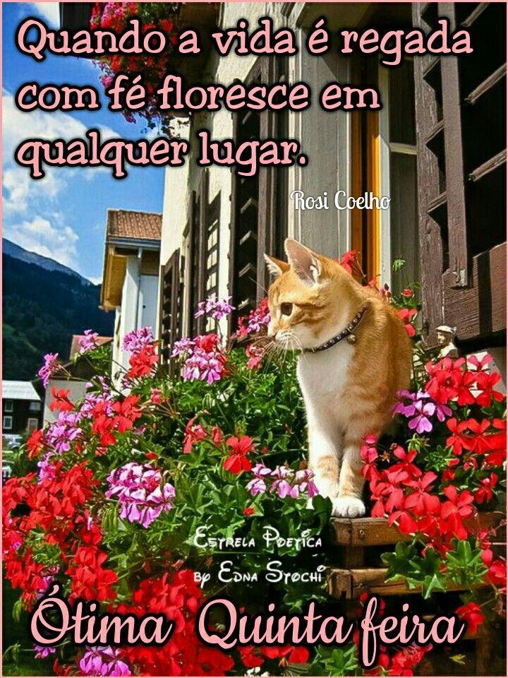 Quinta Feira Quintafeira Bomdia Flores Filhotes De Gatos