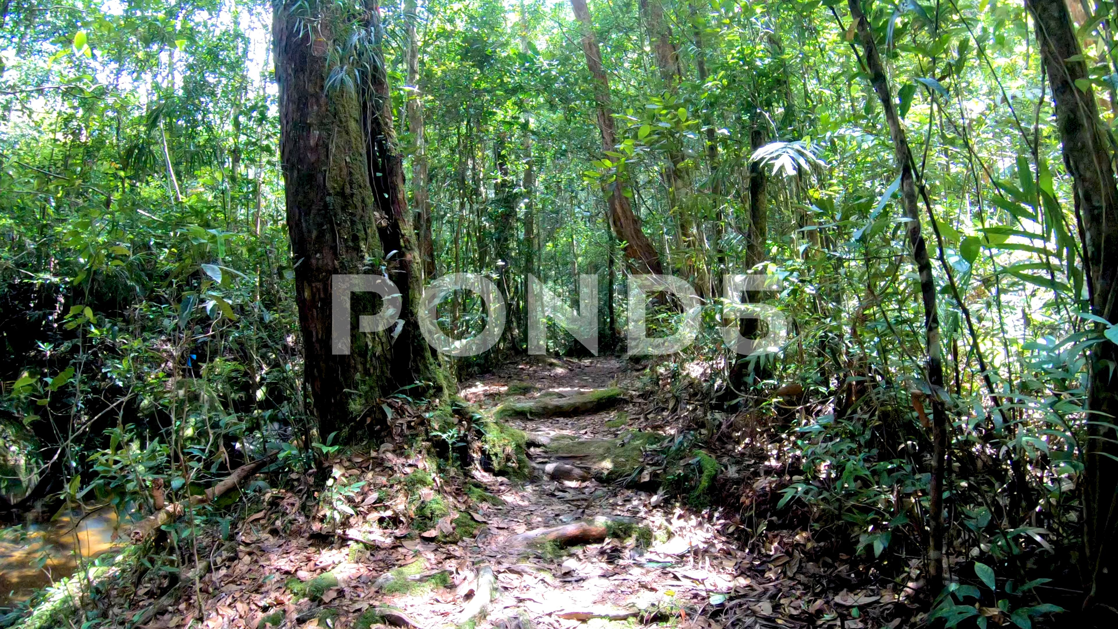 Nature Footage Of Walk Along A Tropical Rainforest Nature Trail Stock Footage Ad Walk Tropical Nature Footage Nature Trail Tropical Rainforest Rainforest