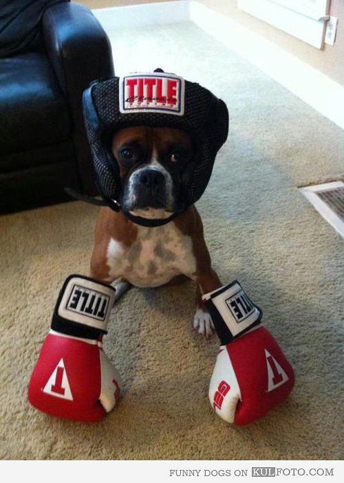 Boxer Funny Boxer Dog Wearing Boxing Gloves And Helmet Boxer