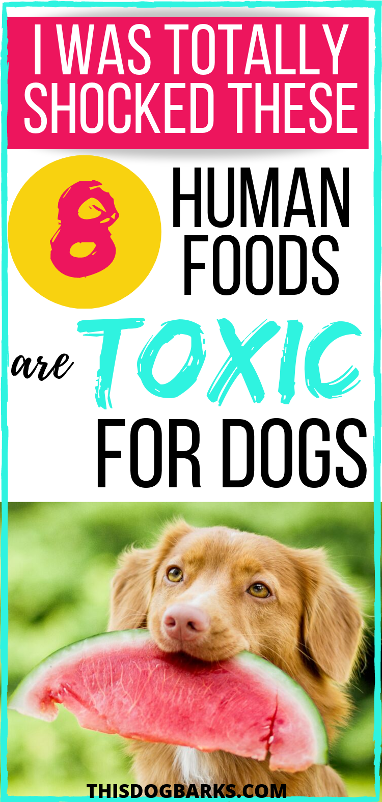 Foods Dogs Can't Eat Never Share These 8 Toxic Foods For