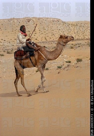 Hombre beduino montando en camello en el desierto
