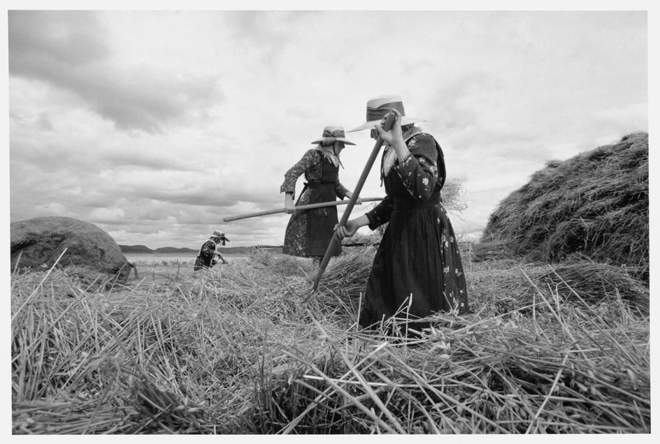Larry Towell. The Mennonites