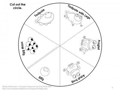 FREE Science Activities Frog Life Cycle Interactive