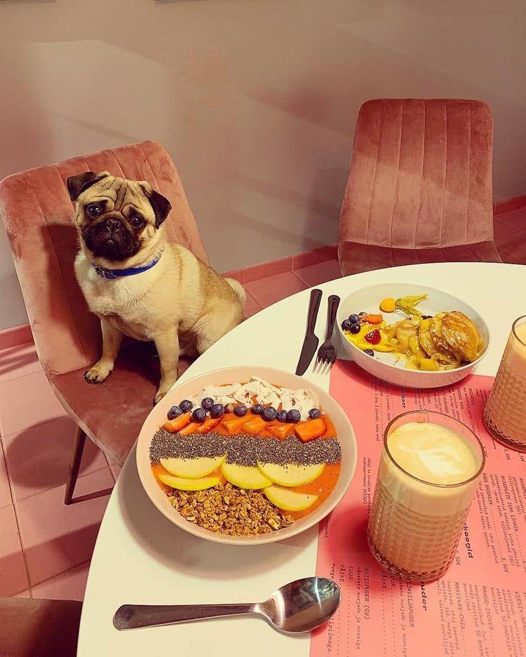 Instagram Com Johannak Cute Puppy Dog Animal Pets Cute Puppies Dogs And Puppies Puppies