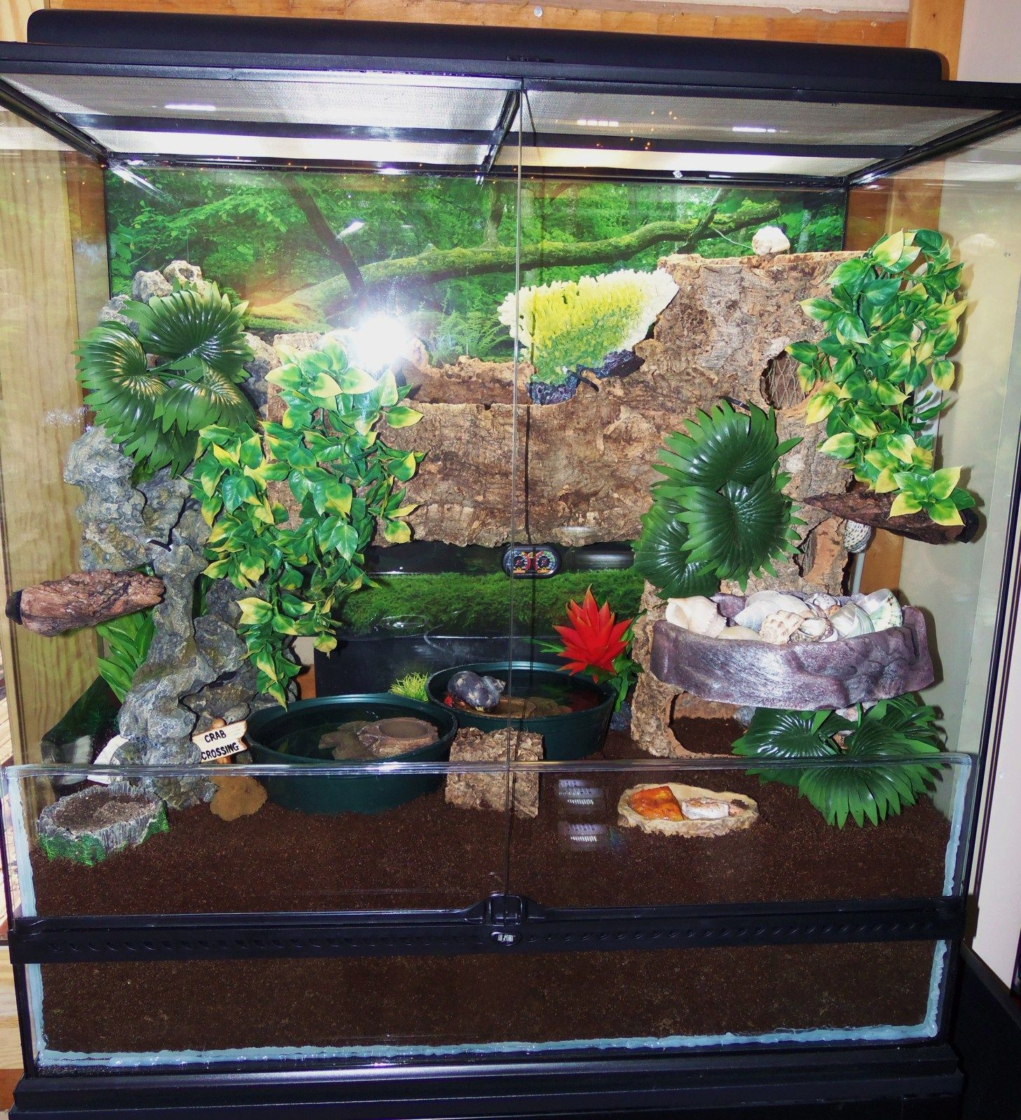 Hermit Crab Habitat Google Search Crabitat And Hermit