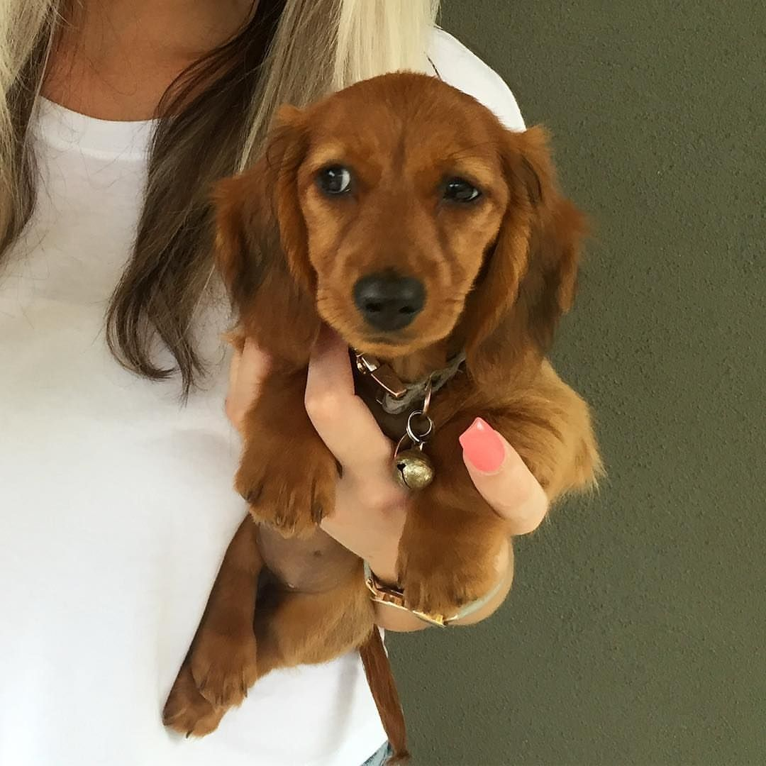 Are you sure about that? 🤔 via river_the_mini_dachshund
