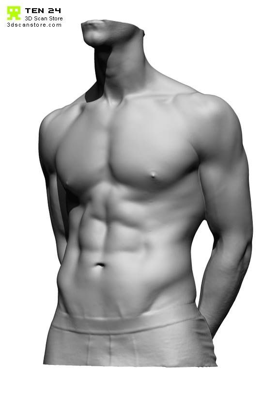 Ten24 Torso Scan Male Torso Anatomy Man Anatomy