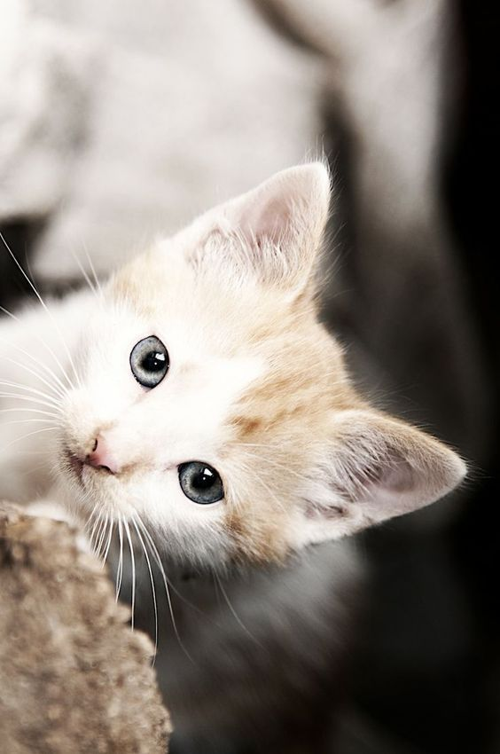 Why are cats better than puppies? in 2020 | Pretty cats