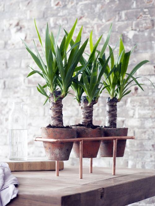 Plant Yucca Elle Decoration Nl Macetas Planta De La