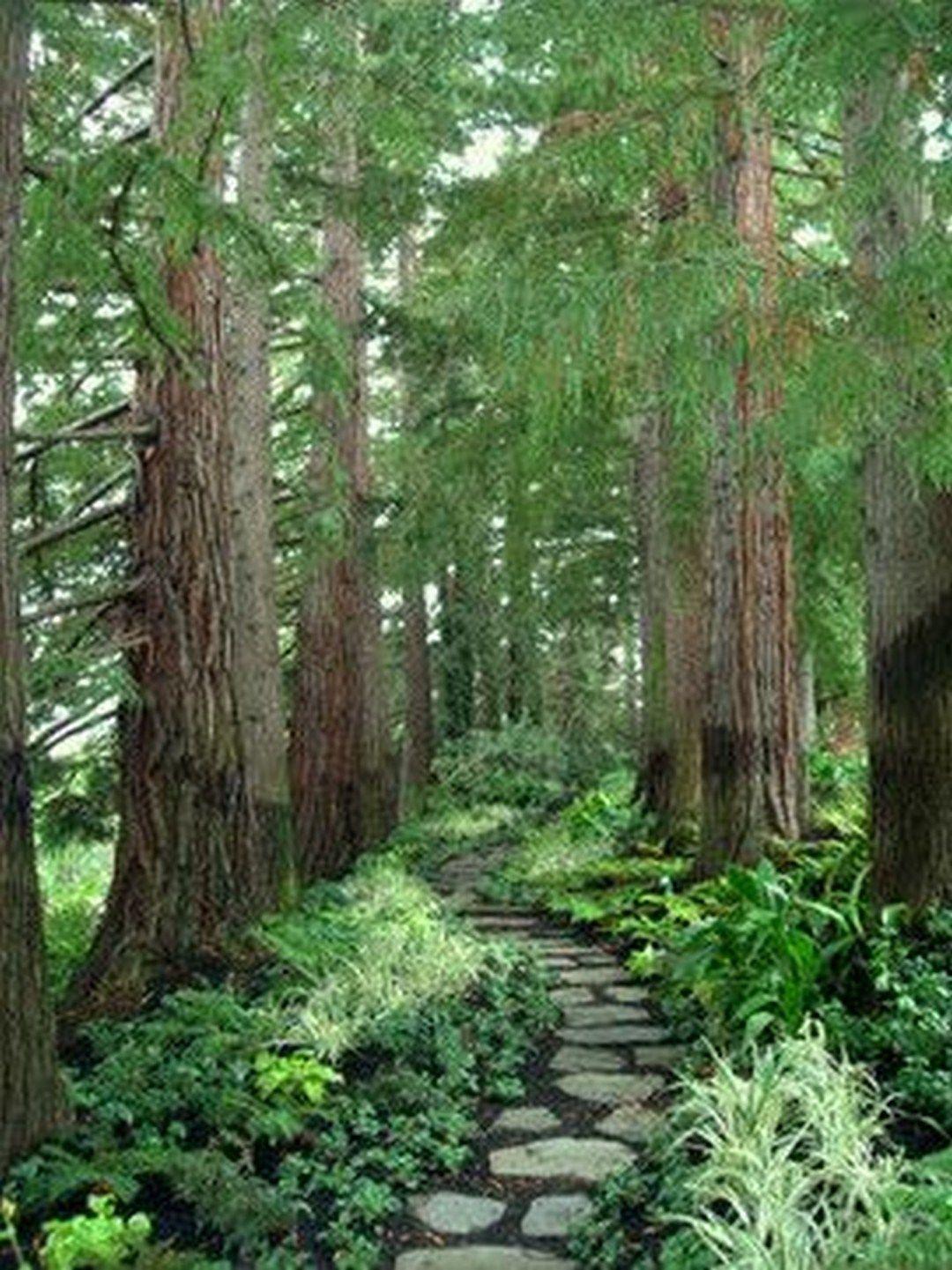 Love The Blending Of Garden Into Forest 35 Inspiration Photos 35 Onechitecture Landscape Design Low Maintenance Garden Design Easy Landscaping