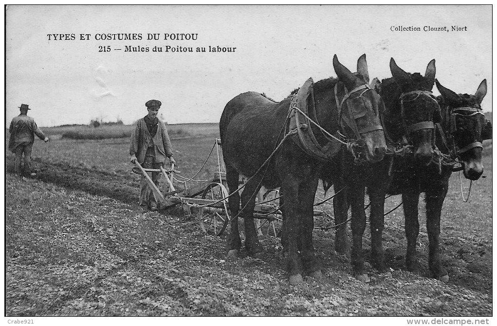 Cartes Postales / travaux des champs 79 - Delcampe.fr | Carte postale, Photos anciennes, Cartes ...