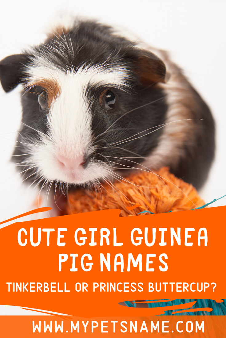 Pin On Guinea Pig Names