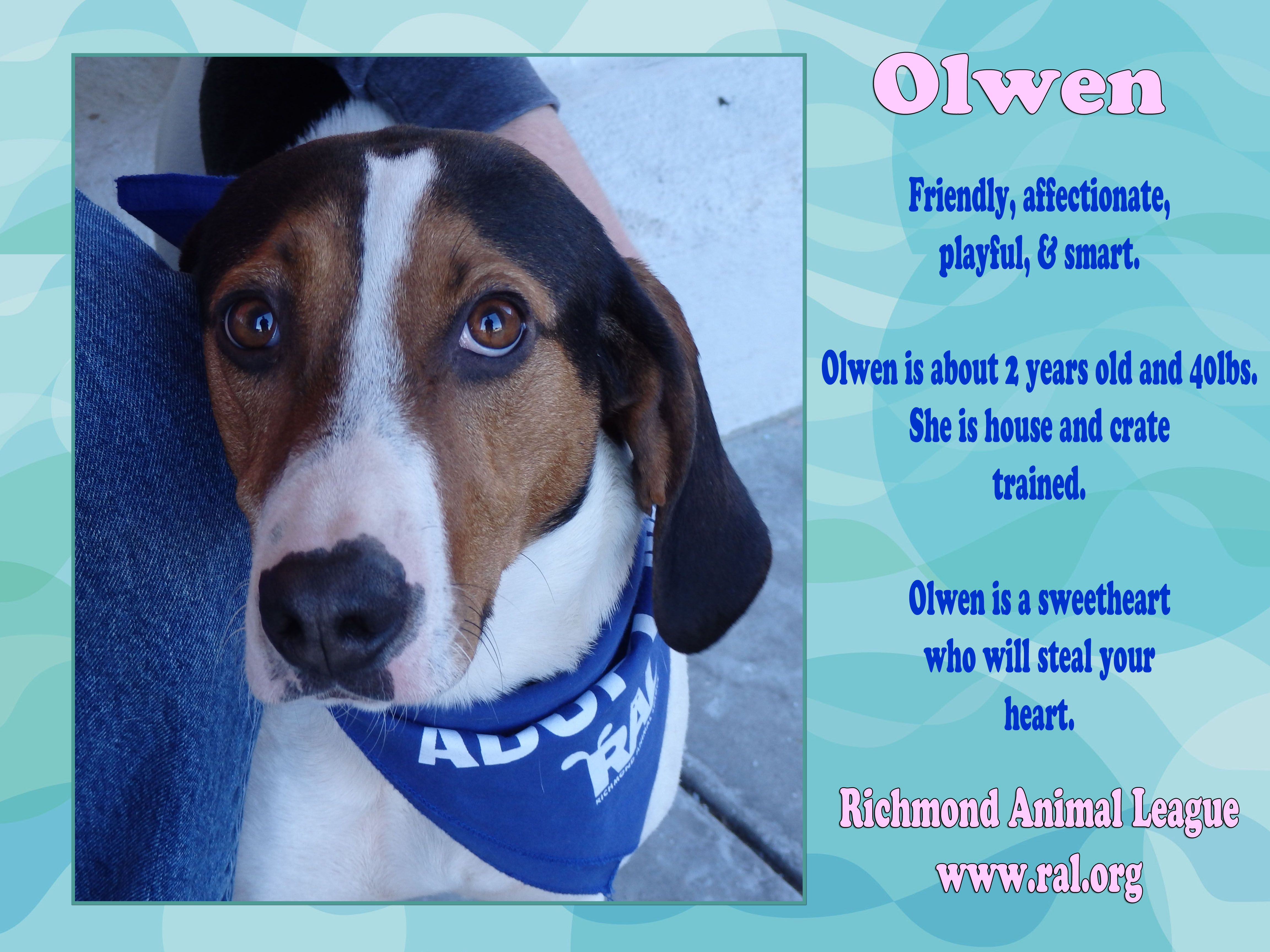 Olwen is available for adoption! Read more about Olwen at