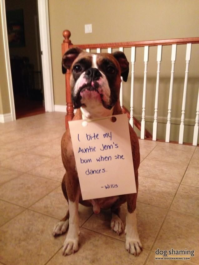 Pin on Boxer Shaming