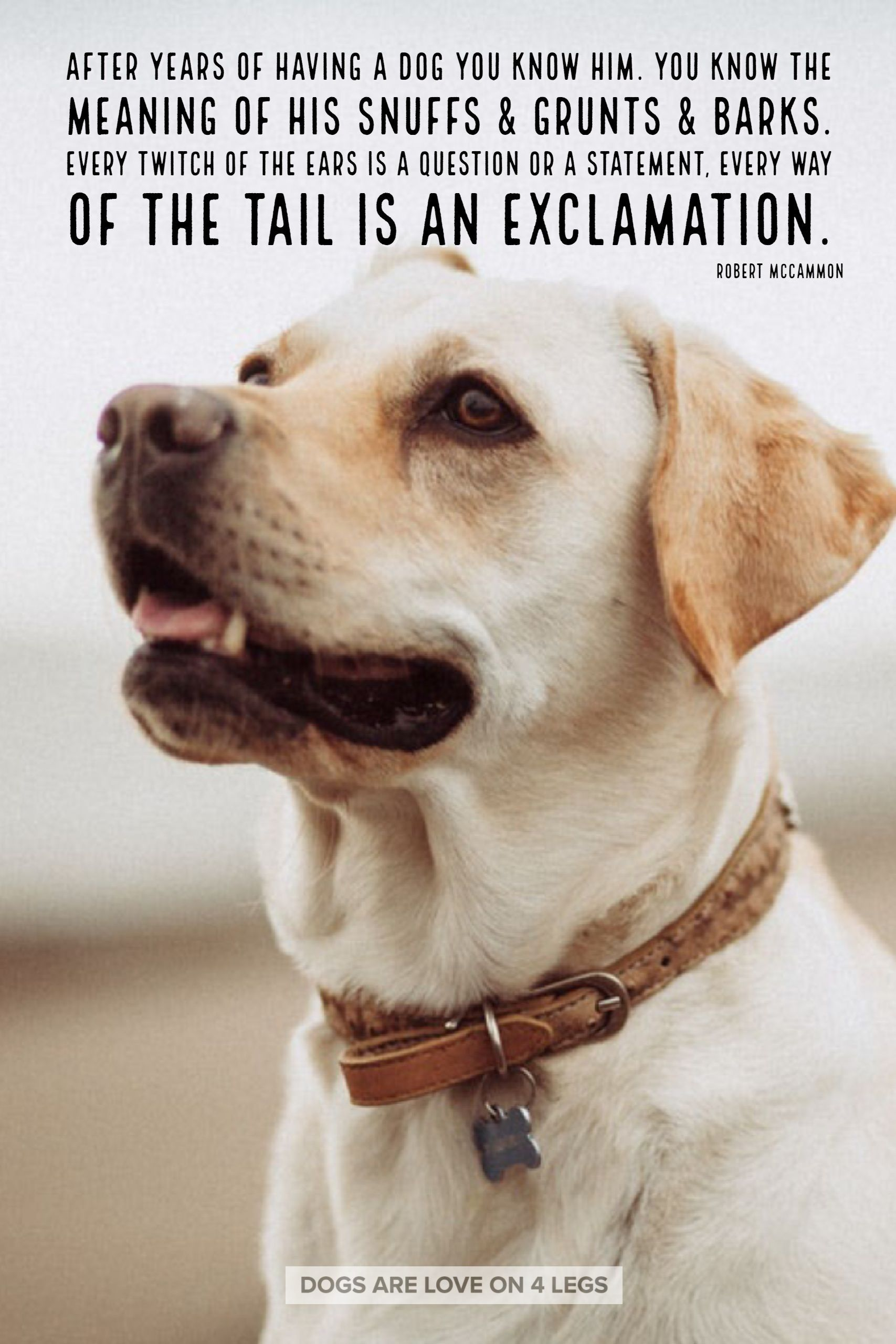 Dog Quote - After years of having a dog you know him ...