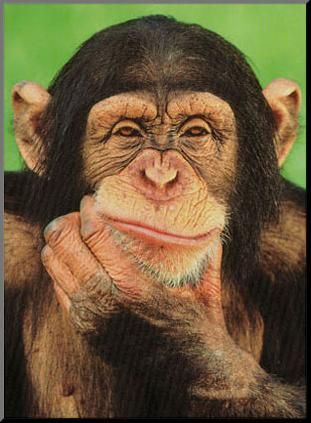 Free photo: Isolated, Thinking, Freedom, Ape - Free Image on ...