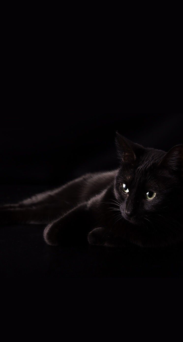 Adorable Black Cat Iphone Wallpaper Background Cat Wallpaper Cute Black Cats Cats