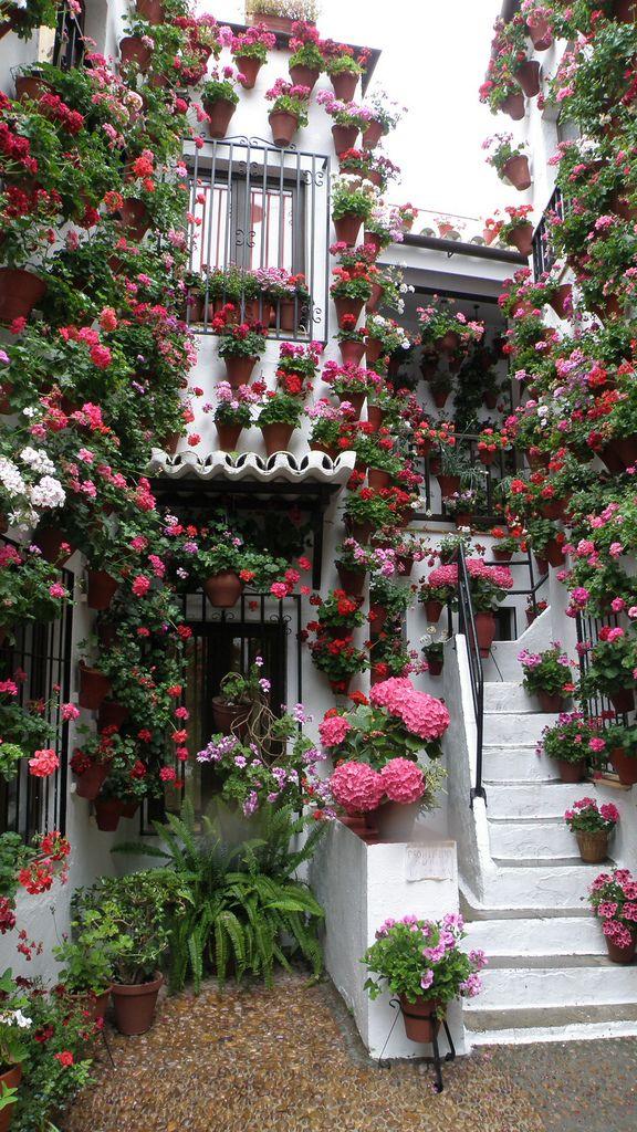 20 Fotos Que Explican La Belleza De Los Patios De Córdoba Viajes 101lugaresincreibles Jardines Colgantes Jardines Bonitos Patios De Cordoba