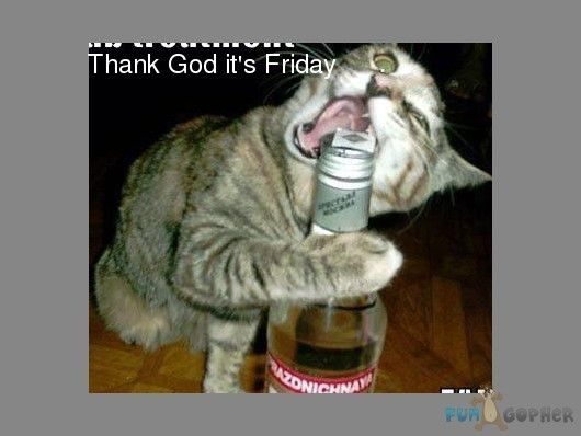 Thank God Its Friday Cartoons Thank God Friday Thank God Its