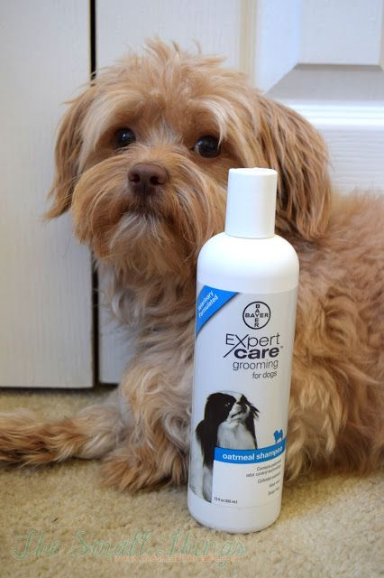 Max Loves His Bayerexpertcare Oatmeal Shampoo Available At Petsmart Sponsored The Small Things Reviews Travel G Oatmeal Shampoo Pet Grooming Love Him