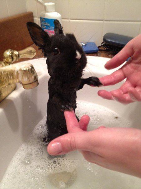 wet bunny!