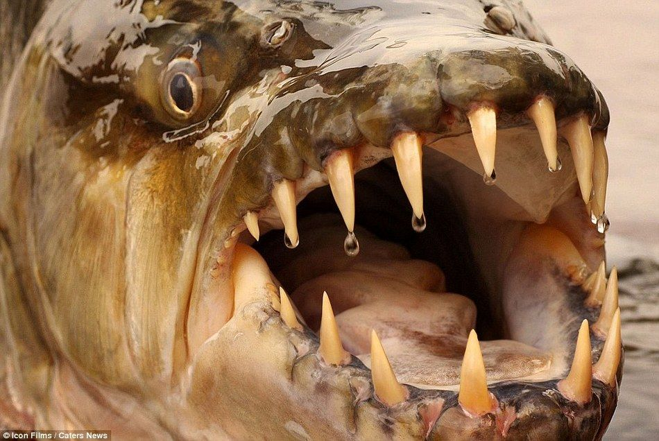 "Odd-Looking Homes | Odd-looking ""river monsters"""