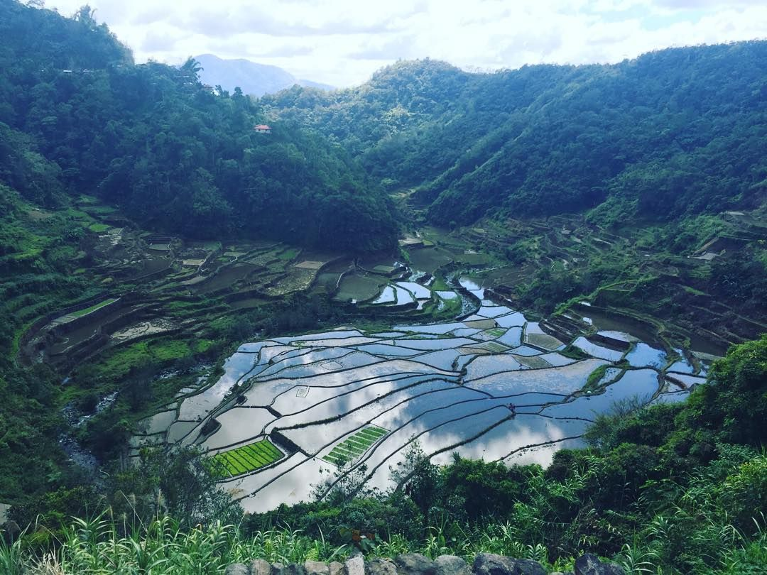 Shared by ferhat_oo #landscape #contratahotel (o) http://ift.tt/1nF6Af6 landscape. #batad #riceterraces #ricefields  #philippines #travel #worldheritage