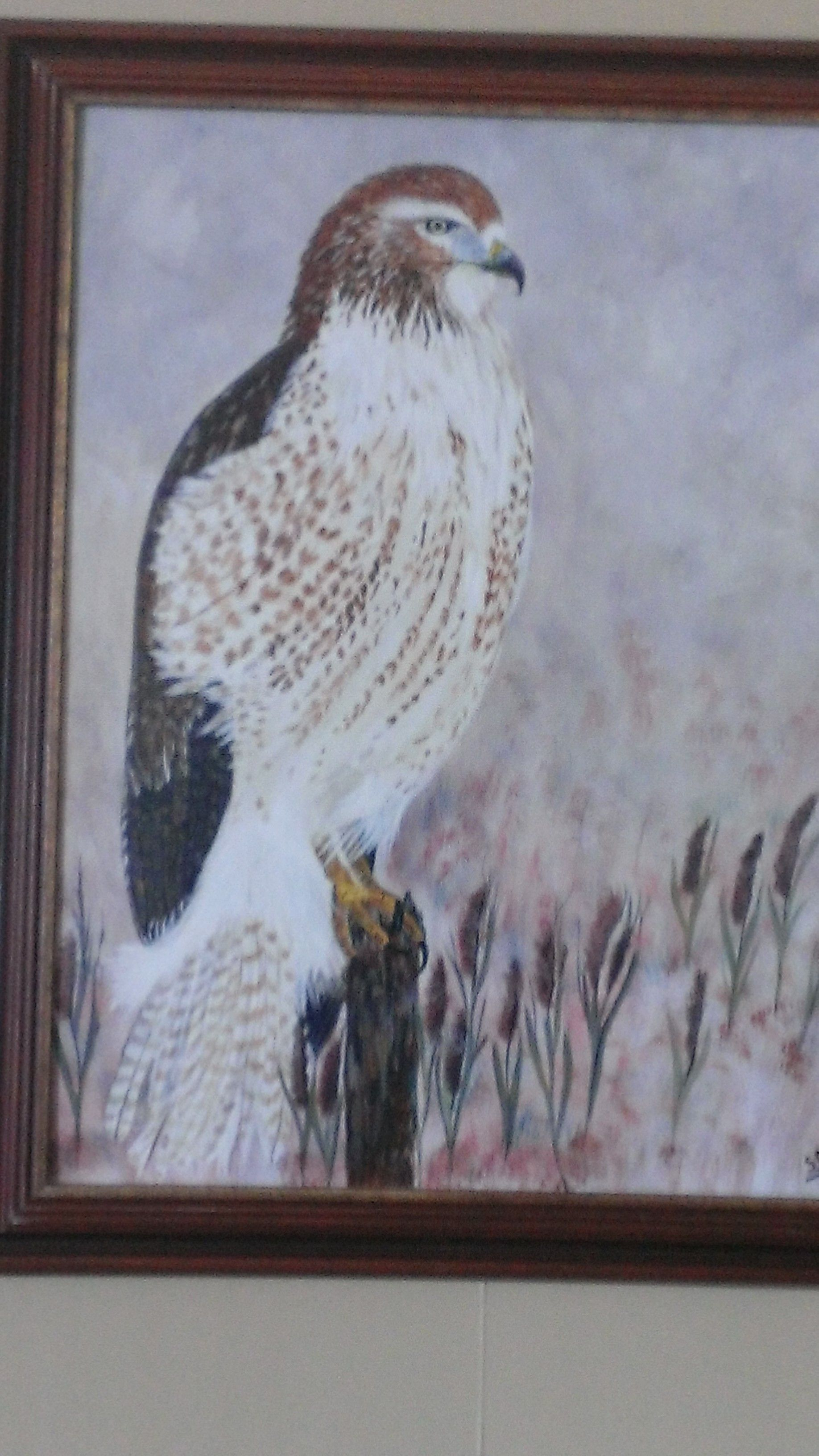Red tail hawk painting by Sam desgagnes