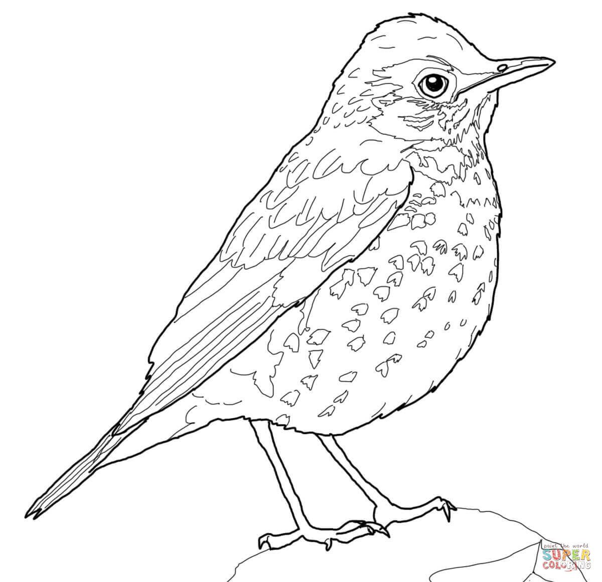 Wood Thrush Bird Super Coloring Coloring Pages Birds