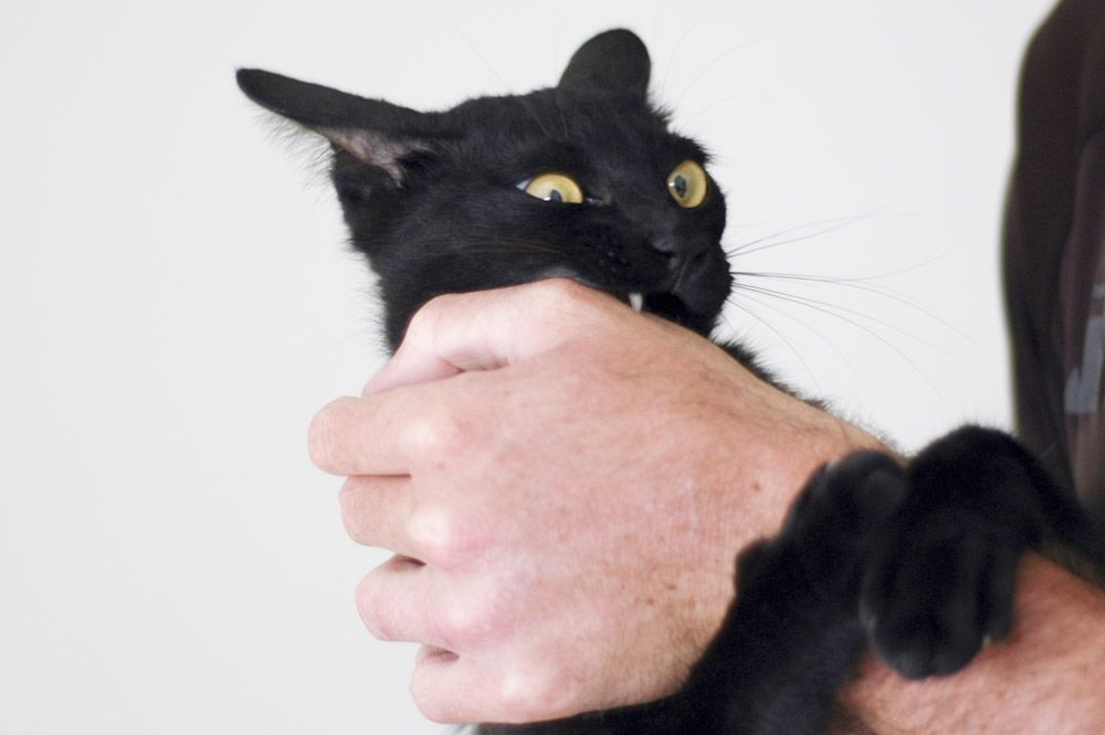 Stop A Cat From Biting And Scratching Cat Biting Cat Training Cats