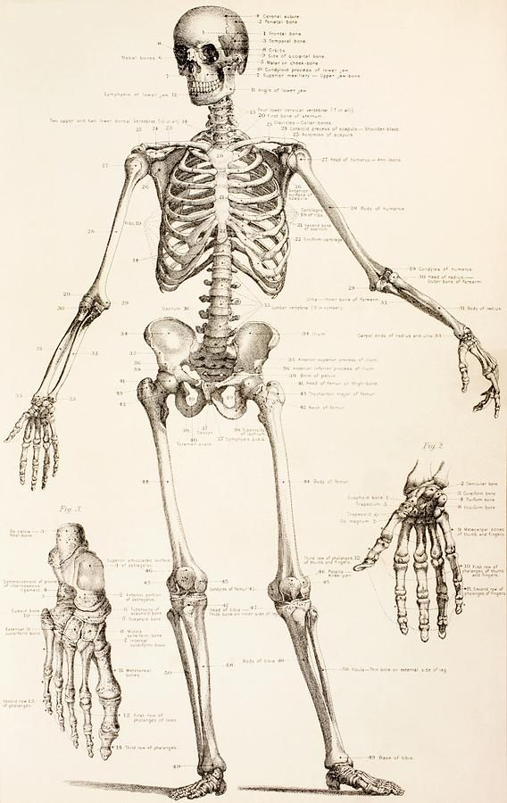 the human skeleton | occult, english and the o'jays, Skeleton