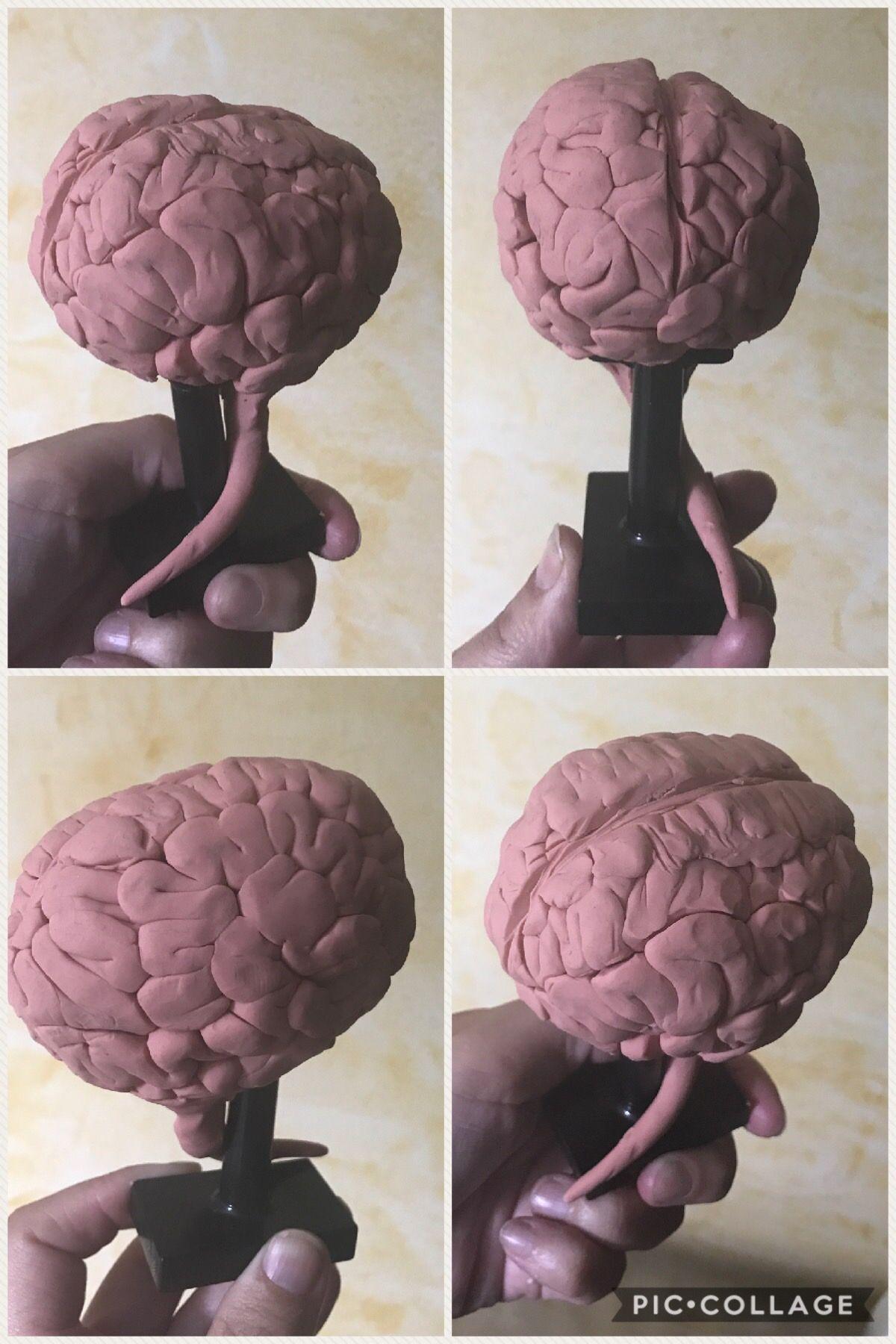 Pin de Ana Gallego en Sistema nervioso para niños | Pinterest ...