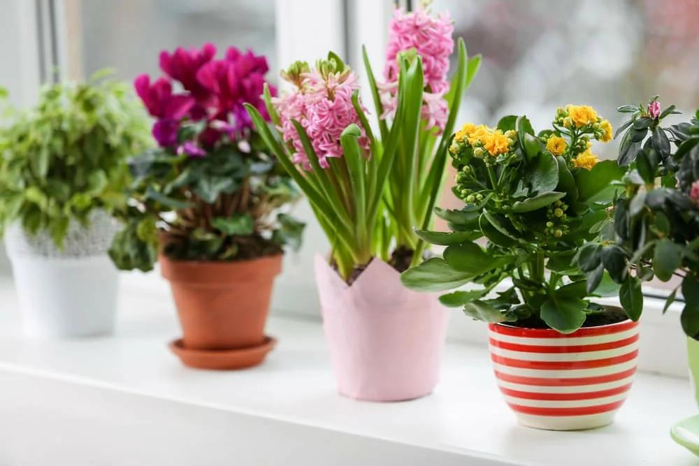 чем можно поливать комнатные растения