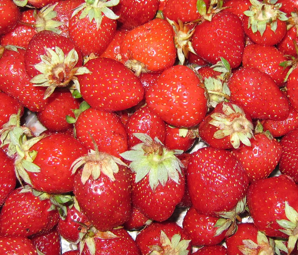 Strawberry Plant How To Grow Care Strawberry Plants Growing Strawberries Strawberry