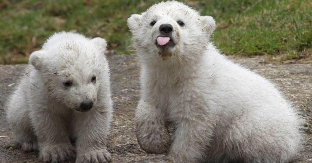 the best bear jokes bears polar bear and animal