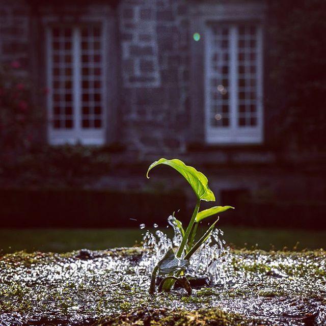 Una fracción de segundo irrepetible #jardín #garden #gardenlovers #pazo #historia #galicia #vilagarcía #arousa