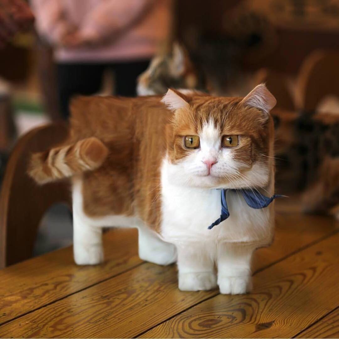 A Minecrafted Cat Cute Cat Breeds Munchkin Kitten Munchkin Cat