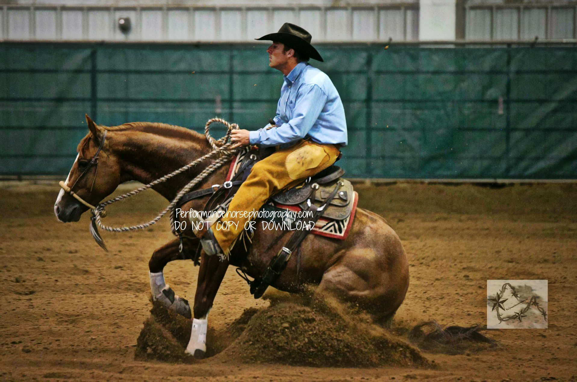 Reining Metallic Cat Image by Performancehorsephotography.com