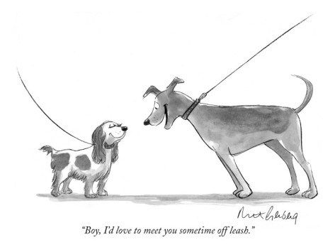Leash Reactivity It S Trainable But Not How You Might Think