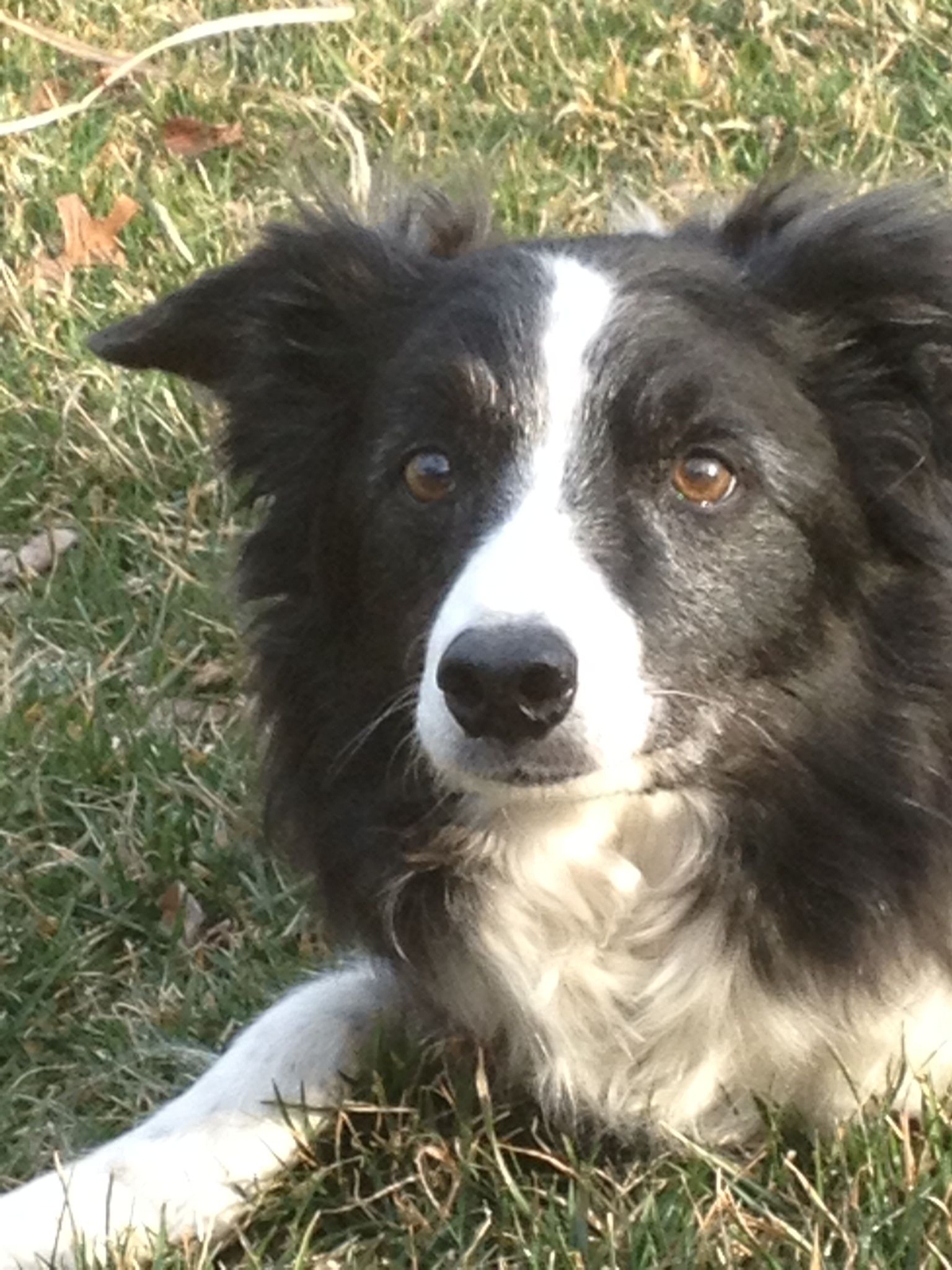 Crosley The Matriarch She Was The Crosmonaut Yes Best Dog Ever She Was 14 In This Photo Border Collie Dogs Collie