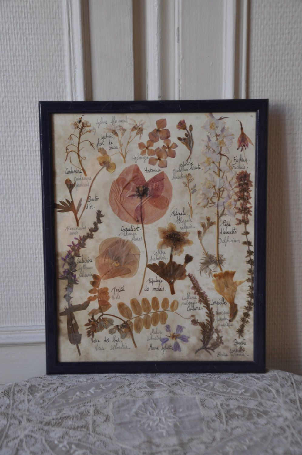 French s framed botanical art pressed flower arrangement