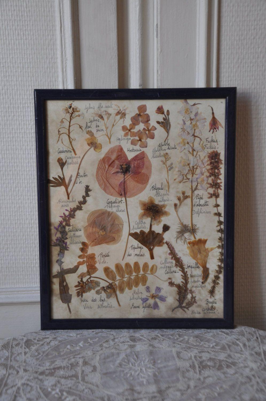 French 1920s Framed Botanical Art, Pressed Flower