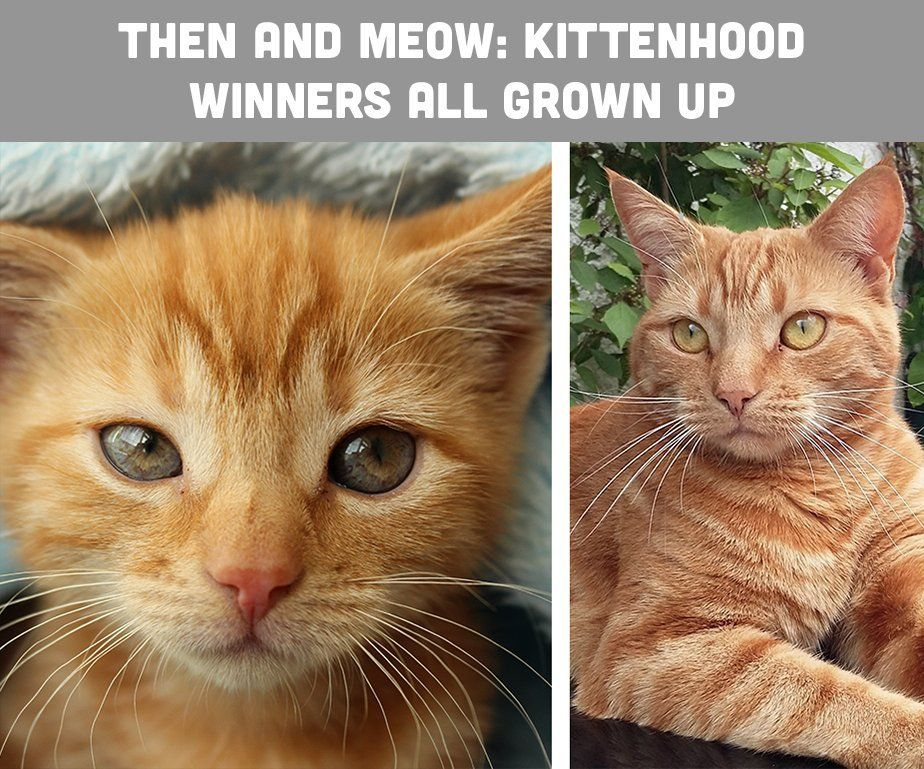 Then and Meow Kittenhood Photography Competition Winners