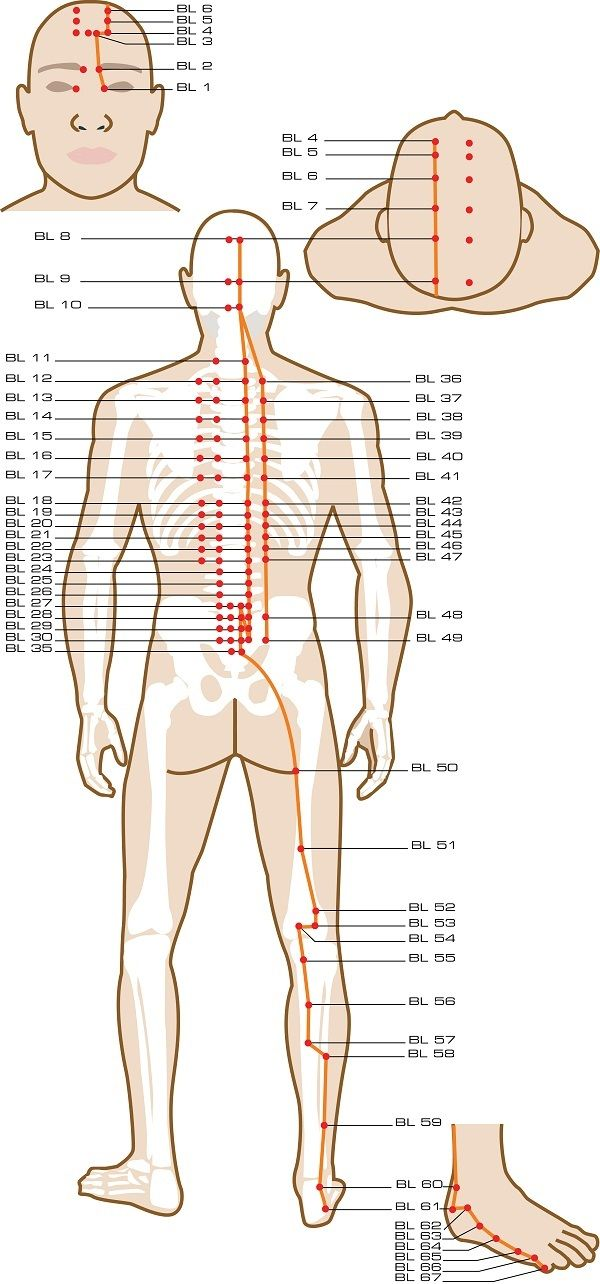 Urinary Bladder Acupuncture Points | Anatomia Człowieka i jego ...