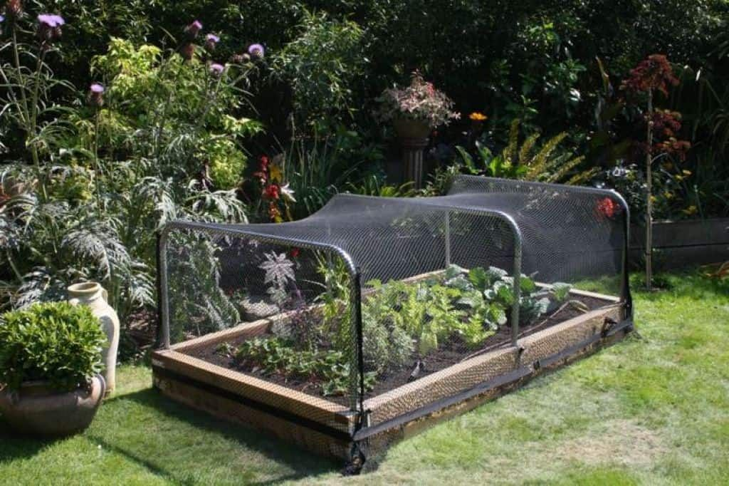 Ways To Keep Squirrels Out Of Your Garden Garden Netting Raised