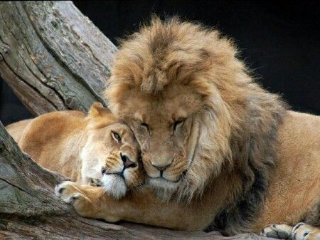 King & Queen....lazy love