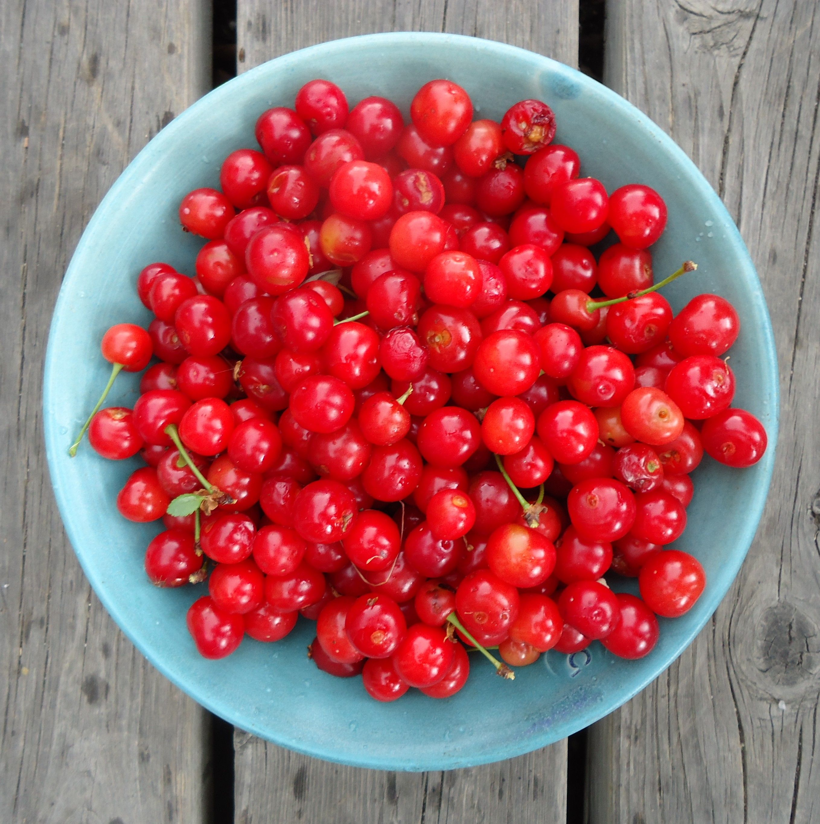 Add Sour Cherry Spirits To Your Food Preservation Arsenal Sour Cherry Preserving Food Food