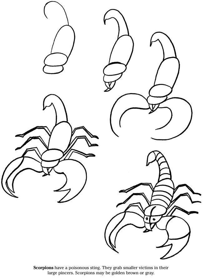 2016 10 En Skorpion En 2019 Como Dibujar Animales