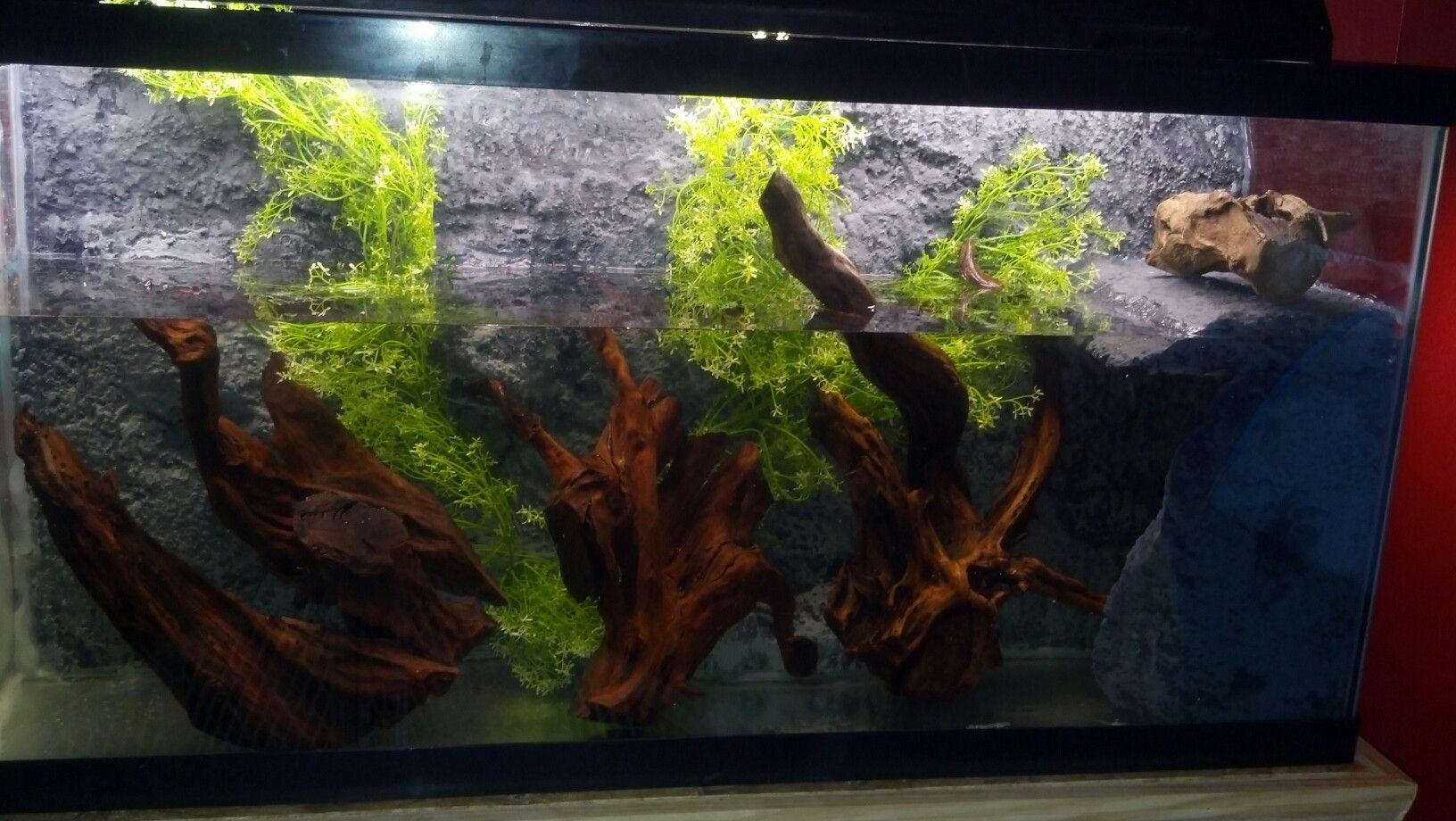 Diy Turtle Tank Background And Landing Reptile