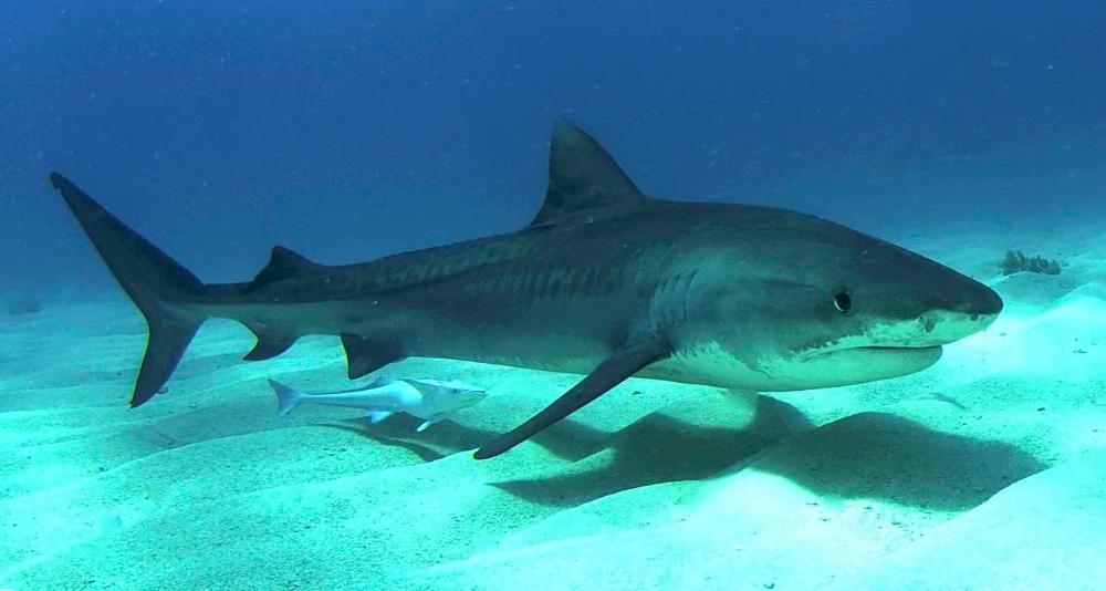 акула картинка для детей - Поиск в Google | Акула, Маки, Рыба
